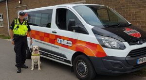 Licensed Trade Substance Detection Dogs